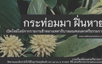 กระท่อมมา ฝิ่นหาย : เปิดไทม์ไลน์จากรายงานข้าหลวงเทศาภิบาลมณฑลนครศรีธรรมราช (๑๑ ต.ค. ๒๕๖๔) Kratom Came, Opium Disappeared: Open the Timeline From the Report of Monthon Nakorn Sri Dhammaraj Commissioners (Oct 11, 2021)